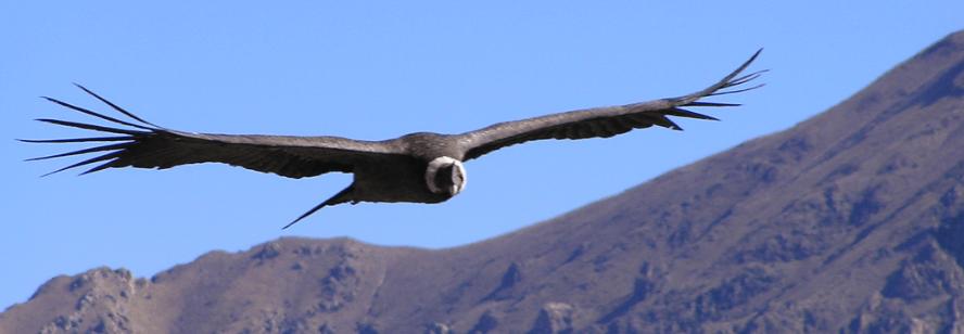 iron-condor-1
