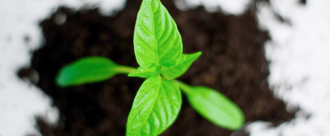stock yield enhancement program uitleg