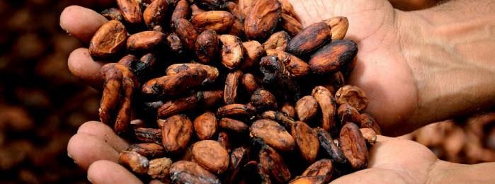 Beleggen in grondstoffen | Cacao aandelen