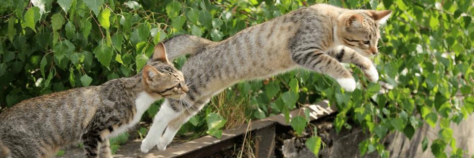 Betekenis dead cat bounce