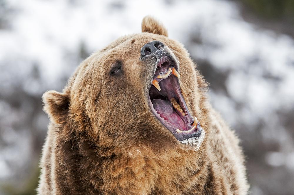 Bull en bear markten: Signalen van de markt en hoe om te gaan met stieren en beren