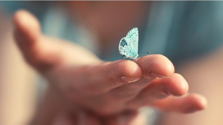 butterfly optiestrategie